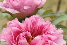 maria cristina corboli / Fiore Petaloso