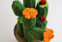 Кактосы цветы / Про кактусы