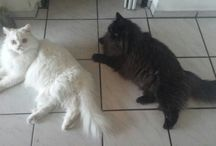My animals ♡