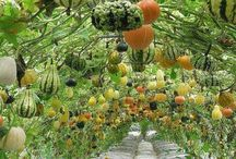 Serre de légumes et fruits