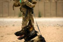 USMC & SERVICE / WORKING DOGs / Respect, loyalty, courage, dignity, trust, awareness, salvage, salute, honor not enough words to describe the emotions for these men & animals and what they mean to me and you.