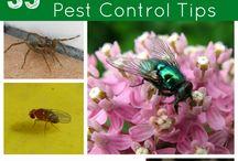 Natural pest control  -オーガニックな害虫駆除方法-