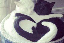cats / by Tiffany Dearborn
