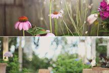garden or die / by Faye Steiner-Woods