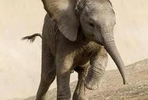 Elephants / by Noelle Smith