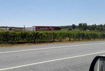 Vinyards Setúbal Península / Vinyards in Setúbal Península, an excelent wine region located Soth of Lisbon, between Tagus and Sado river.