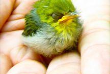 kuşlarim