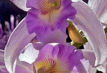 Orquídeas minha paixão!!! / Um simples gesto fez nascer esta paixão!!!!