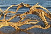 driftwood - dalgaların karaya attığı odun / Dalgaların kıyıya attığı odun parçalarından yapılan sanat