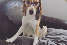 Edie, Watson and pets / Nous on a Sultan, et vous, c'est qui la petite boule de poil qui vous tient compagnie ? Faites péter leurs photos avec nos lunettes !