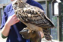 owls / bird of prey