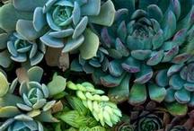 garden / Terrariums, dream back yards, interesting plants