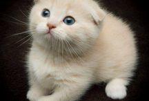 Cute adorable kawaii animals