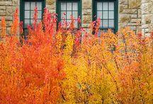 Gardening / by Carol McDaniel