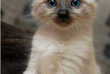 Cats / Big cats, little cats, black cats, orange cats, all cats.
