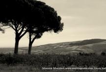 il vino siciliano