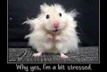 Too Funny! (or Too Cute!)