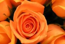 Orange / by Rhonda Glumac