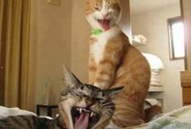 Animals / I think all of these are funny/adorable.
