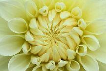 цветы-шары-доставка.рф /   «цветы-шары-доставка.рф» - интернет магазин цветов  предлагает свежесрезанные цветы, цветочные букеты,  букеты для невест, горшечные цветы, гелиевые шары, воздушные шары, оформление торжеств цветочными композициями, шарами и тканями у нас всегда большой выбор для удовлетворения самых разных вкусов.
