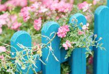 Garden inspiration & ideas