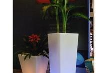 new-idea-光鉢
