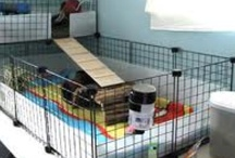 playpens for guinea pigs