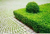 hedges hedges hedges
