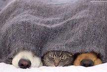 Aranyos Kutyusok Meg Cicák