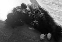 Gatos / Bolas de pelo