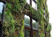 Fachadas verdes / Green facades