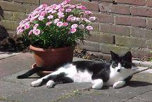 binkie / foto's van Binkie mijn kat