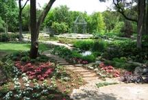 garden / by Eneida Ruiz