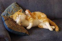 Коты в мире / Коллекция