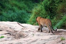 Safaris at Lion Sands Game Reserve