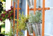 S Garden / For anne :)