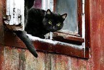 Kitty cats / Kitty cats