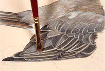 Watercolour - Birds and butterflies