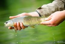 100% Pêche / Techniques de pêche, articles de pêche pour les amoureux de la nature, du grand air et de la pêche.