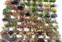 hanging plants garden