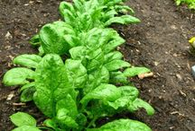 Gardening / Here are some creative ideas, frugal tips and green thumb sites we can all learn from.