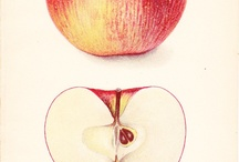 Apple drawings