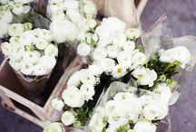 Floral&Plants