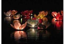 Floraisons Lumineuses / La lumière c'est magnifique