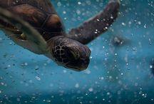 Oceans Alive / by Dawn Schmidt