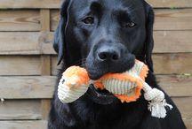 HUNDESPIELZEUG | KENSONS for dogs / Wir haben für Euch ausgewählte Hundespielsachen wie Bälle mit Seil, Hundespielzeug mit Quietscher, super weiche Kuscheltiere, Spielzeug mit Seil für die kaufreudigen Hunde.  Ein Hundespielzeug dient nicht nur dazu, den Hund zu beschäftigen, sondern auch die Beziehung zwischen Frauchen und Herrchen zu stärken, gemeinsam zu spielen, zu erziehen und den Bewegungsdrang zu unterstützen.  Bei uns findet Ihr für jeden Hund das individuelle Spielzeug.