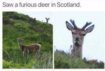 grappige dieren