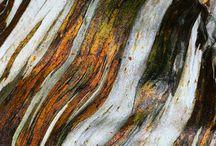 Cortezas de árbol / Tree bark
