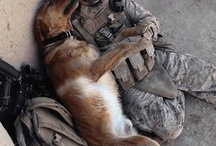 canine warriors / dogs who serve in the military and who are heroes and warriors