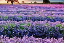 Travel dreams//Provence